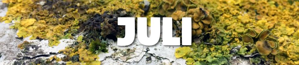 Laufbericht Juli